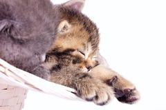 2 котят спать Стоковая Фотография RF