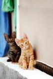 2 котят Стоковые Фото