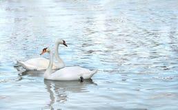 2 лебедя Стоковые Фото