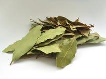 2 листь залива близких вверх Стоковые Фотографии RF