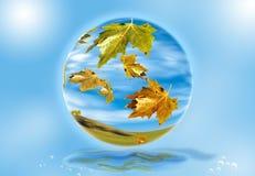 2 листь осени падая Стоковые Изображения RF