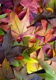 2 листь осени Стоковые Фото