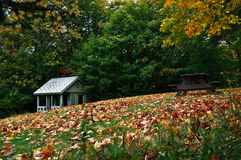 2 листь осени Стоковые Изображения