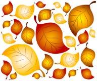 2 листь предпосылки осени Стоковое Изображение