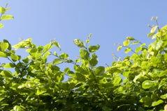 2 листь Стоковое фото RF
