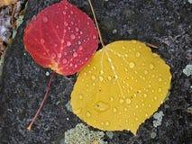 2 листь Стоковые Изображения
