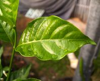 2 листь Стоковая Фотография