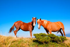 2 лошади стоковое изображение rf