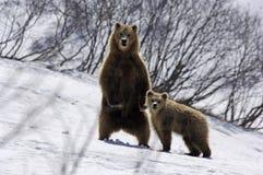 2 медведя Стоковая Фотография