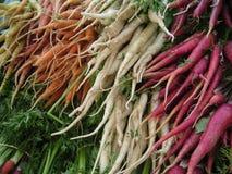 2 моркови множественной Стоковые Изображения