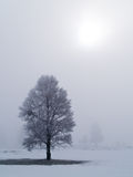 2 морозных туманных вала стоковое изображение