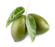 2 оливки с листьями Стоковое фото RF