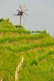 2 отсутствие виноградника Стоковое Изображение