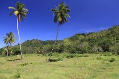 2 пальмы Стоковая Фотография