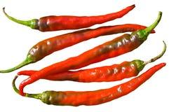 2 перца chili красного Стоковые Изображения RF