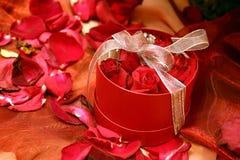 2 положили красные розы в коробку Стоковое Изображение RF