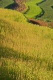 2 поля фарфора terraced Стоковое Изображение