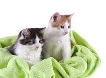 2 прелестных котят Стоковое Изображение RF