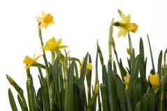 2 приезжанная весна Стоковые Фотографии RF