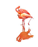 2 птицы фламингоа Стоковое Изображение RF
