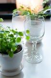 2 пустых стекла вина год сбора винограда Стоковая Фотография