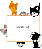 2 различных котят устанавливают текст ваш Стоковые Изображения