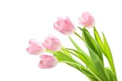 2 розовых тюльпана Стоковые Фото