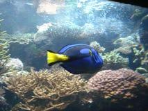 2 рыбы Стоковые Фото