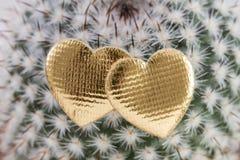2 сердца на кактусе Стоковые Изображения RF