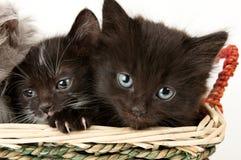 2 унылых котят Стоковая Фотография