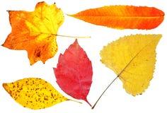 2 установленного листь осени Стоковые Изображения