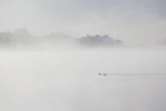2 утки плавая в туманное озеро Стоковые Фотографии RF