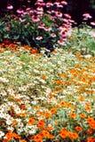 2 цветка кровати Стоковые Фотографии RF