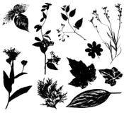 2 черных вектора листьев цветков Стоковая Фотография