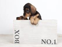2 щенят в деревянной коробке стоковые изображения
