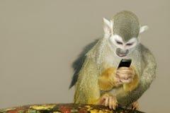 2猴子 免版税库存照片