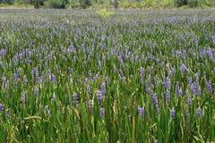 2紫色海运 免版税图库摄影