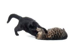 коты воюя играющ 2 стоковые фото