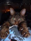 2个猫爪 库存照片
