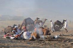 2 2009 верблюдов справедливый ноябрь puskar Стоковая Фотография RF