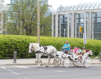 2 2012 тюльпанов ottawa лошади празднества экипажа Стоковая Фотография