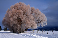 2农村场面冬天 库存图片