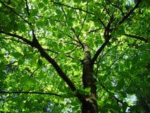 2个森林结构 免版税库存照片