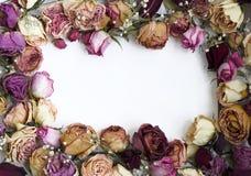 2朵框架玫瑰 库存图片