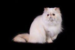 2猫 免版税库存图片