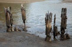 泥沼2 库存图片