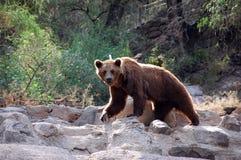 2熊 免版税库存照片