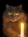 2猫 免版税库存照片