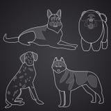狗不同的品种在线性样式的 第2.部分 库存照片