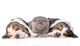Котенок лежа с 2 щенятами гончей выхода пластов спать Изолировано на белизне Стоковая Фотография RF